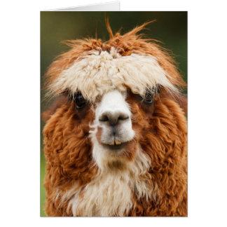 Funny alpaca with big teeth cards