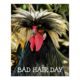 Funny Bad Hair Day Chicken Photo Poster