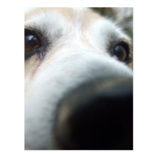 Funny Beagle Nose Postcard