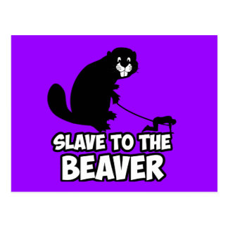 Funny Beaver Postcard