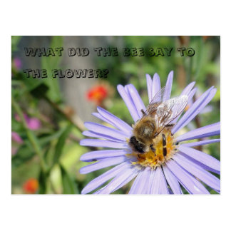 Funny Bee Postcard