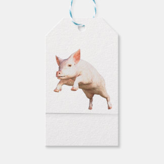 Funny big young  pig jumping high gift tags