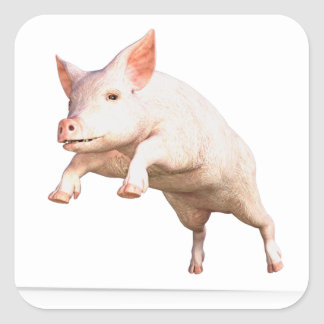 Funny big young  pig jumping high square sticker