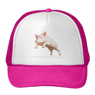 Funny big young  pig jumping high trucker hat