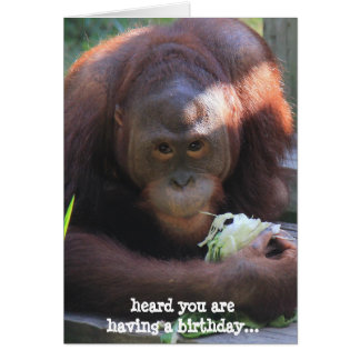 Funny Birthday Card, Orangutan wants cake! Card