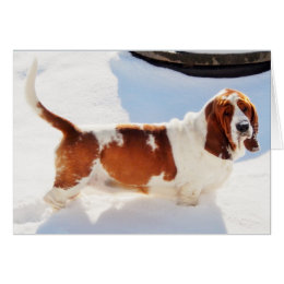 Cute basset hound birthday cards photocards invitations more funny birthday card wbeautiful basset hound bookmarktalkfo Gallery