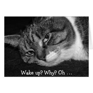 Funny Birthday Card with Cat: Wake up? Why?