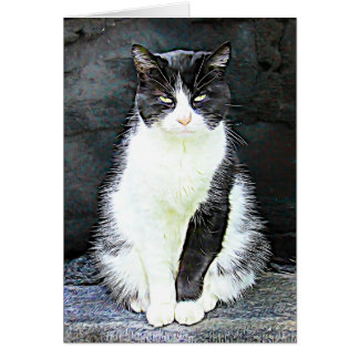 Funny Black and White Cat  Photo Blank Card