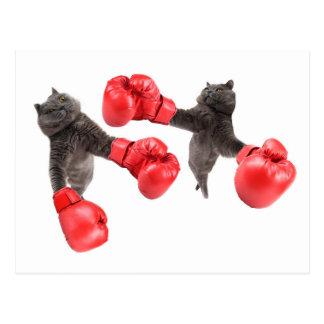 Funny boxing cats postcard