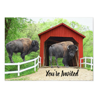 Funny Buffalo At The Red Covered Bridge Card