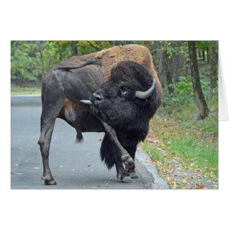 Funny Buffalo Card