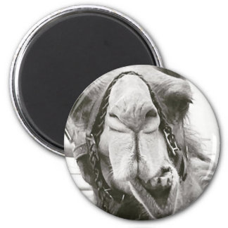 Funny Camel 2 Inch Round Magnet