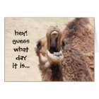 Funny Camel Hump Day Retirement Card