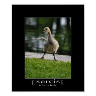 Funny Canada Goose Gosling Exercise Demotivational Posters