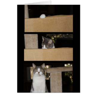 Funny Cat Admirer Card
