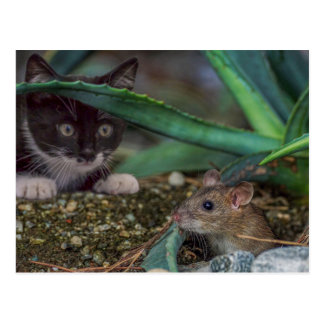 Funny Cat and Mouse Postcard
