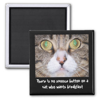 Funny Cat and Saying Magnet