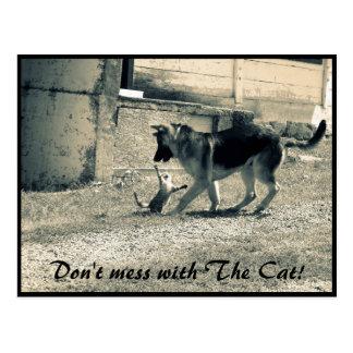 Funny cat&dog photo postcard. Black and white Postcard