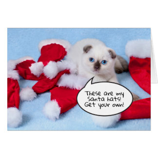 Funny cat kitten with santa hats customizable card