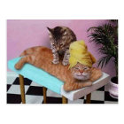 Funny Cat Massage Postcard