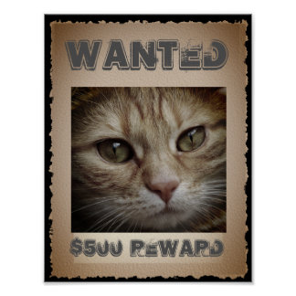 Funny Cat Wanted Poster