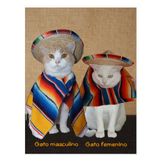Funny Cats in Sombreros for Fun or Teaching Postcard