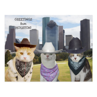 Funny Cats/Kitties Greetings from Houston Postcard