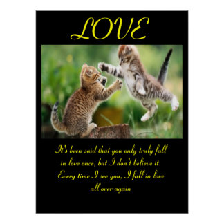Funny cats love quotation poster