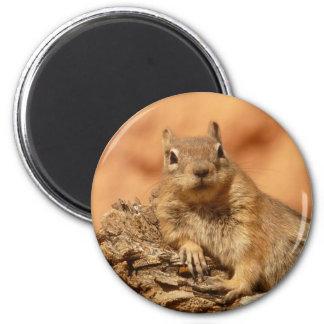Funny chipmunk lying on a rock magnet