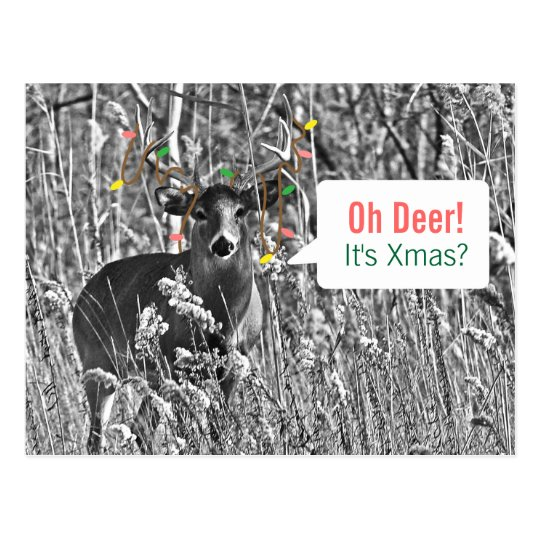 Funny Christmas - Deer with Christmas Lights Postcard