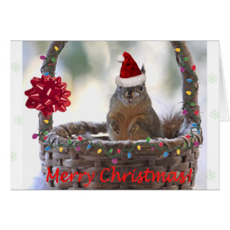 Funny Christmas Squirrel Card
