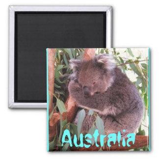 Funny cute koala bear Australia magnet