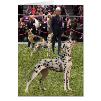 Funny Dalmatian Show Dog Card