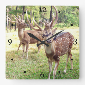 Funny deer looking at you square wall clock