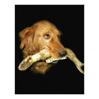 Funny Dog Carrying Horse Teeth Bone Letterhead