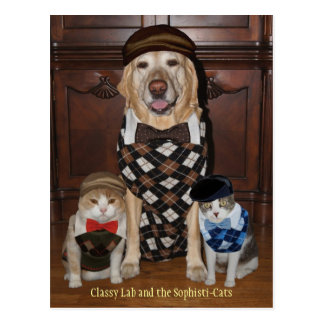 Funny Dog/Lab & Cats in Argyle Sweaters Postcard