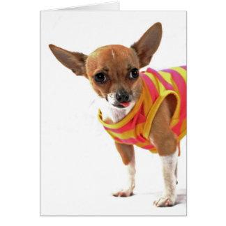 Funny Dog making faces Chihuahua Greeting Card