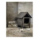 Funny Dog postards Postcard