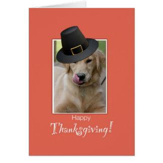 Funny Dog Thanksgiving, Humorous Wearing Pilgrim H Greeting Card