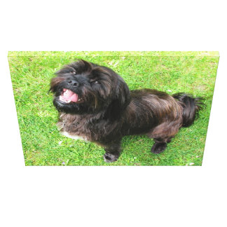 Funny dog with attitude! canvas print