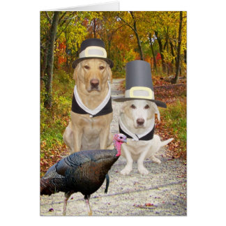 Funny Dogs/Labs Thanksgiving Greeting Card
