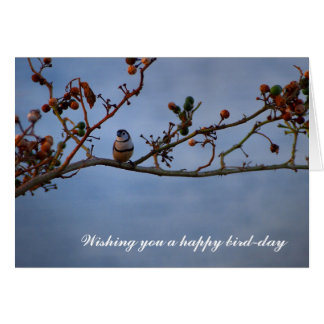 Funny double-barred finch birthday card