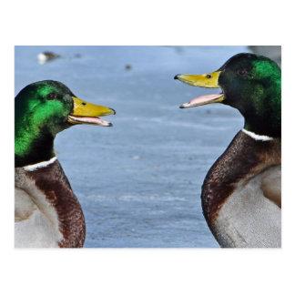 Funny Ducks Postcard