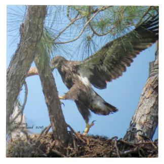 Funny Eagle bird flying Spiegeland Tile