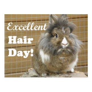 """Funny """"Excellent Hair Day"""" for Rabbit. Postcard"""