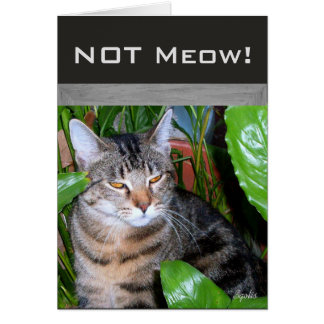 "Funny Expression "" Not Meow"" Cat Note Card"