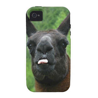 Funny Farm Animal with Attitude Photo Case For The iPhone 4