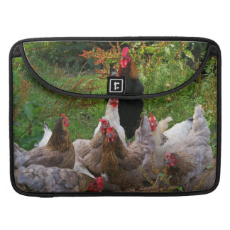 Funny Farmyard Chickens & Rooster MacBook Sleeve Sleeves For MacBook Pro