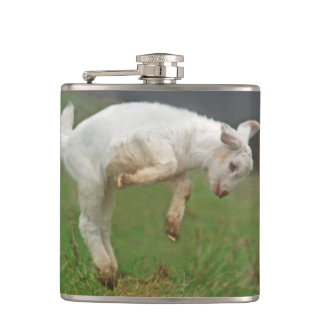 Funny Goat Baby White Goat Jumping in Pasture Hip Flask