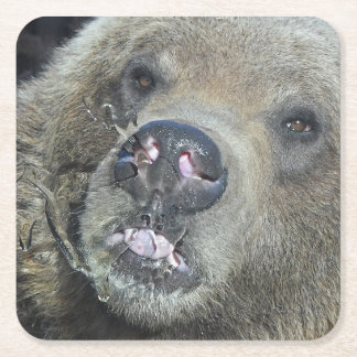 Funny Grizzly Bear Cub Licking The Glass Window Square Paper Coaster